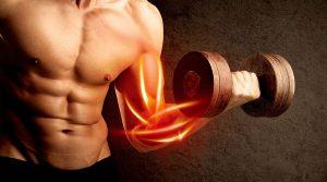 افزایش حجم عضلات با مکمل ال گلوتامین